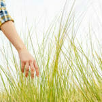Lyme-disease carrying ticks can be found in tall grass