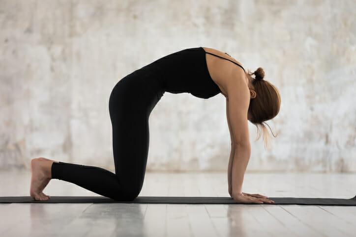 yoga cat cow position